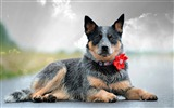 Title:dog collar flower-Widescreen Wallpaper Views:2412