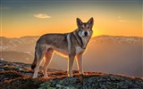 Title:dog mountains sunset-Widescreen Wallpaper Views:2160