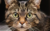 Title:muzzle cat whiskers-Animal Photo Wallpaper Views:2750