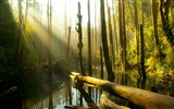 Title:nantou county forest-scenery HD Wallpaper Views:2005
