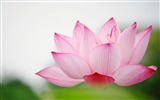 Title:Lotus Macro Flower-Photography HD Wallpapers Views:2906