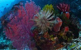 Title:Marine coral organisms-Bing theme wallpaper Views:2543