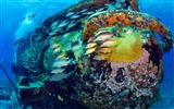 Title:Marine fish debris-Bing theme wallpaper Views:2302