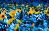 Title:flowers with blue leaves-Photography HD Wallpaper Views:2468