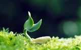Title:green plants-Photography HD Wallpapers Views:2034