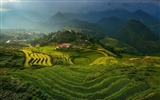 Title:rice terraces in vietnam-Nature HD Wallpaper Views:2783