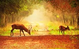 Title:Beautiful deer-Animal Photo Wallpaper Views:2613