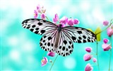 Title:Butterfly Flying-Animal Photo Wallpaper 02 Views:2003