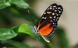 Title:Butterfly Flying-Animal Photo Wallpaper Views:1917