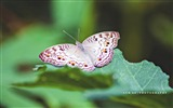 Title:Butterfly Flying-Animal Photo Wallpapers Views:2102