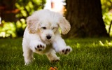Title:Happy Puppy-Animal Photo Wallpaper Views:2284