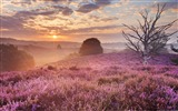 Title:Heather Mist Dutch field-Windows Theme Wallpaper Views:2954
