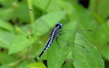 Title:dragonfly-Animal photo wallpapers Views:2857