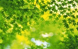 Title:fresh green leaves of plants Wallpaper 04 Views:2281