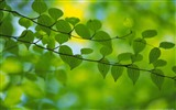Title:fresh green leaves of plants Wallpaper 12 Views:1386
