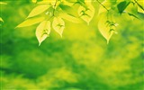 Title:fresh green leaves of plants Wallpaper 14 Views:1871