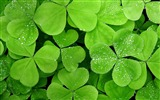 Title:fresh green leaves of plants Wallpaper 15 Views:1844