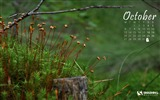Title:Autumn In The Forest-October 2014 Calendar Wallpaper Views:2840