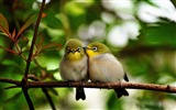Title:Cute Birds Couple-photography HD wallpaper Views:4493