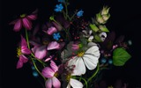 Title:dark flowers-Apple iOS8 iPhone6 Plus HD Wallpaper Views:4960