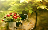 Title:Bicycle Flower Basket-HD Widescreen Wallpaper Views:2803