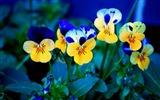 Title:Beautiful flowers plants HD Photo Wallpaper Views:194