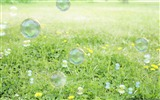 Title:Foam on the field-Windows Theme Wallpaper Views:2448