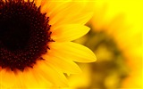 Title:Autumn Flowers Plants HD widescreen wallpaper Views:518