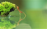 Title:Ant Drinking Water-High quality HD Wallpaper Views:2907