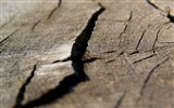 Title:Cracked Wood-High quality wallpaper Views:2222