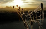 Title:Frost cobwebs-Windows 10 HD Wallpaper Views:5078