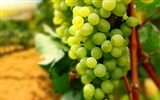 Title:Green Grapes-High quality HD Wallpaper Views:2432