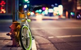 Title:bicycle city street-Photography HD Wallpapers Views:4340