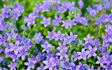 Title:Small Purple Flowers-HD Photography wallpaper Views:2103