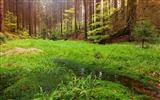 Title:swamp in the forest-Nature wallpaper Views:2291