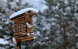 Title:birdhouse snow winter-HD Widescreen Wallpaper Views:2782