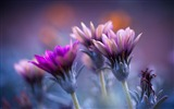 Title:flowers blurred background-HD widescreen wallpaper Views:2757