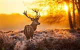 Title:Elk Animal photography theme HD Wallpaper Views:5861