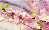 Title:Spring beautiful Sakura photography HD Wallpaper Views:6032