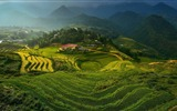 Title:rice terraces in vietnam-Photo HD Wallpaper Views:1669