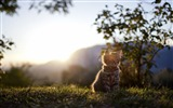Title:Cat Sunshine-Animal HD Wallpaper Views:2505