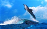 Title:Dolphin Jumping In Waves-Animal HD Wallpaper Views:2898