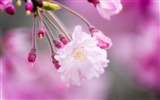 Title:spring in japan-Photography HD wallpaper Views:2596