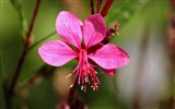 Title:spring pink flower-Photography HD wallpaper Views:2205