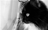 Title:Black and white Cat-Animal HD Wallpaper Views:2186