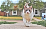 Title:cat street walk spotted-Animal HD Wallpaper Views:2049