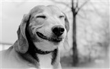 Title:white smiling dog-Animal HD Wallpapers Views:2322