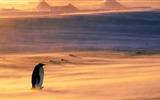 Title:Lonely Penguin-2015 Bing theme wallpaper Views:2469