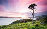 Title:dusk pine scotland-Nature HD Wallpaper Views:1204