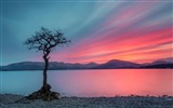Title:lonely tree-Nature HD Wallpaper Views:1582